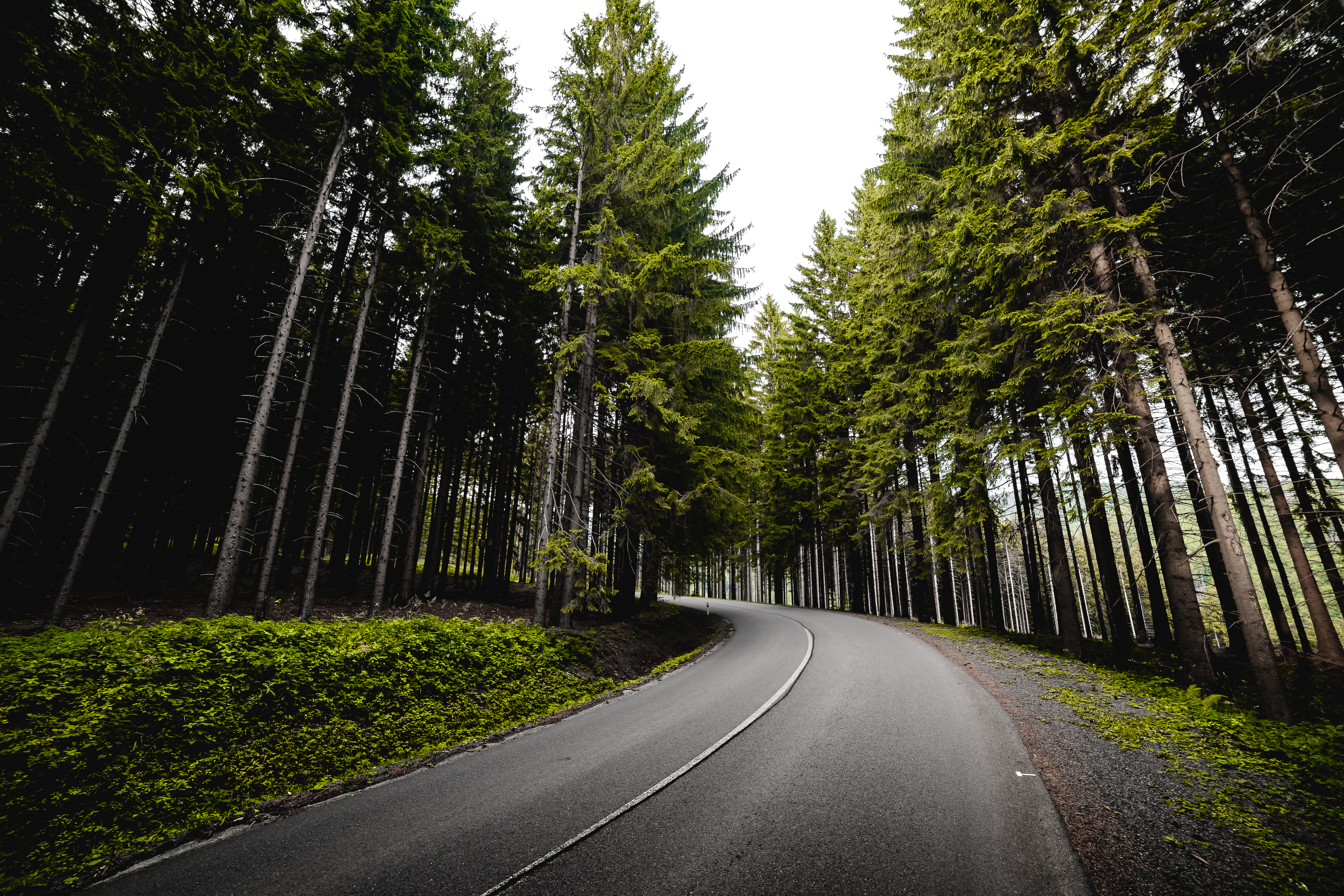 Long Road In Forest Free Stock Photo Picjumbo