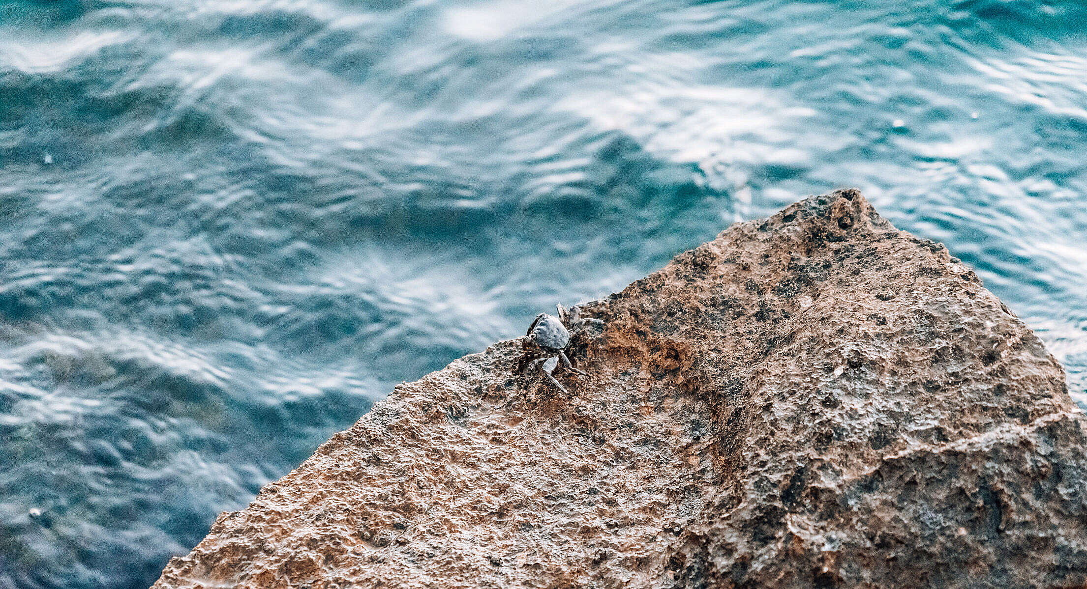 Masked Crab on a Rocky Shore Free Stock Photo