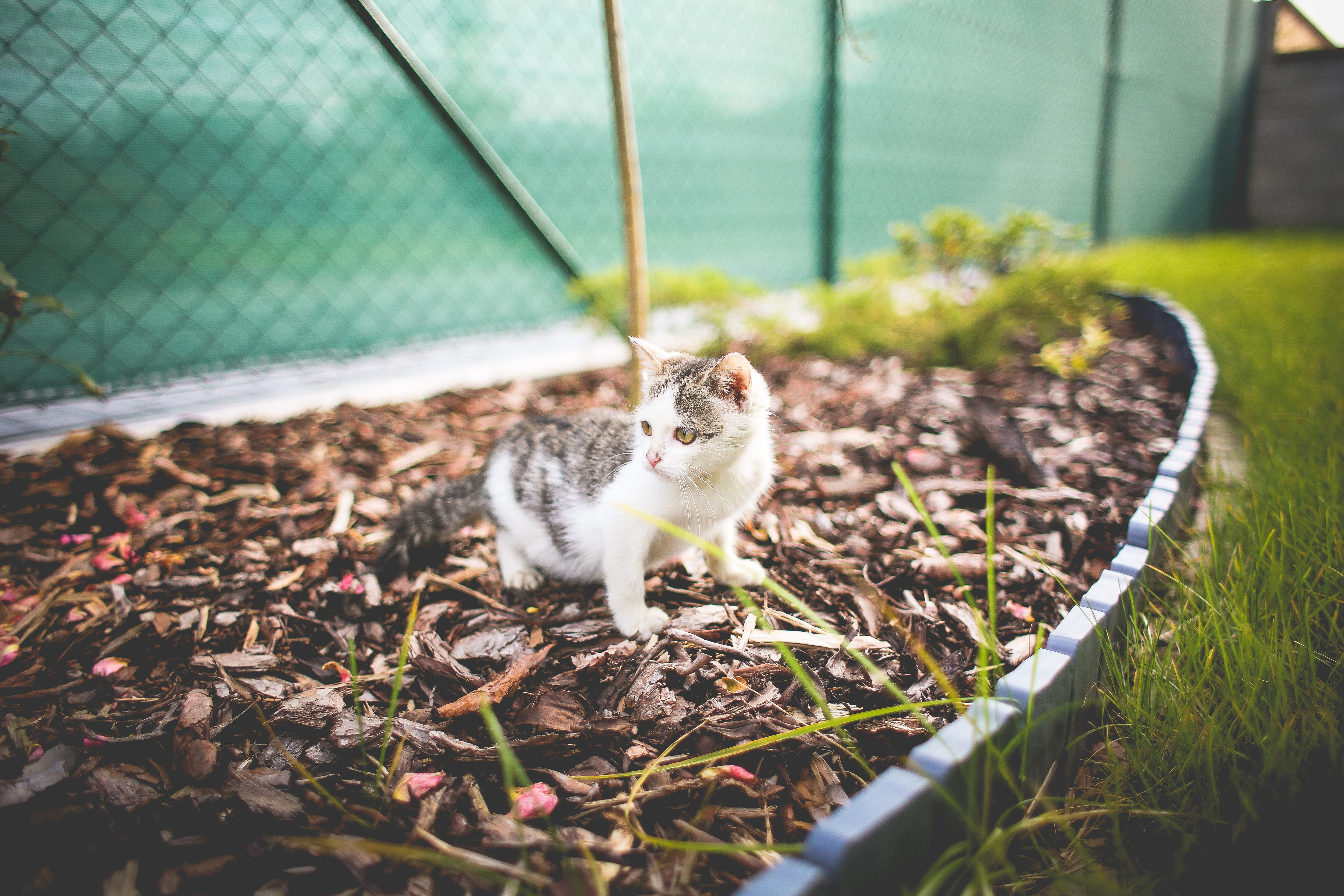 Download Monty The Cat in the Garden FREE Stock Photo