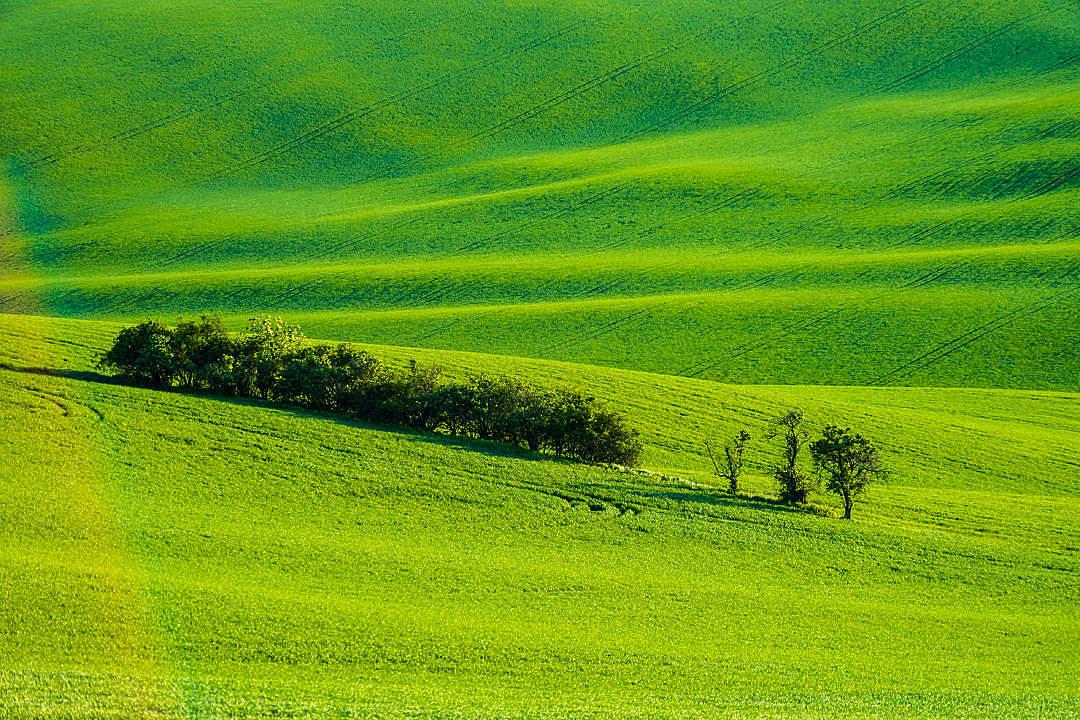 Download Moravian Tuscany Green Wheat Fields FREE Stock Photo