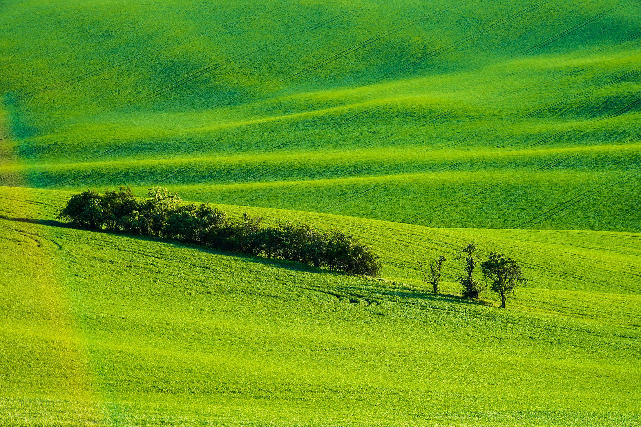 Moravian Tuscany Green Wheat Fields Free Stock Photo