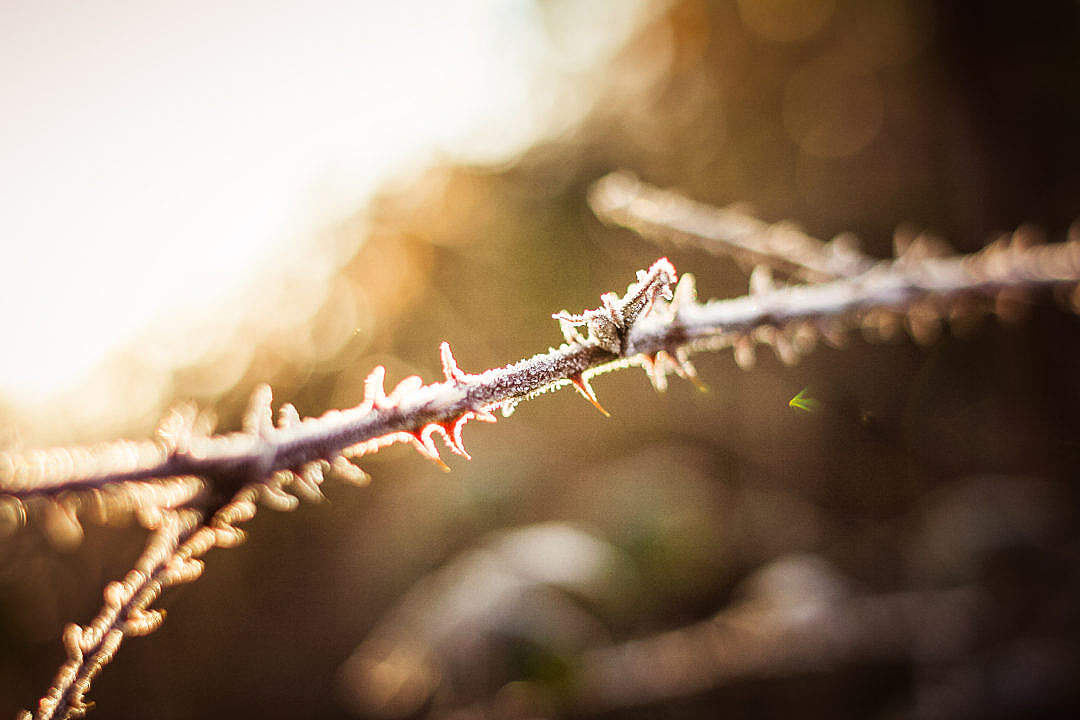 Download Morning Dew Detail in the Forest FREE Stock Photo