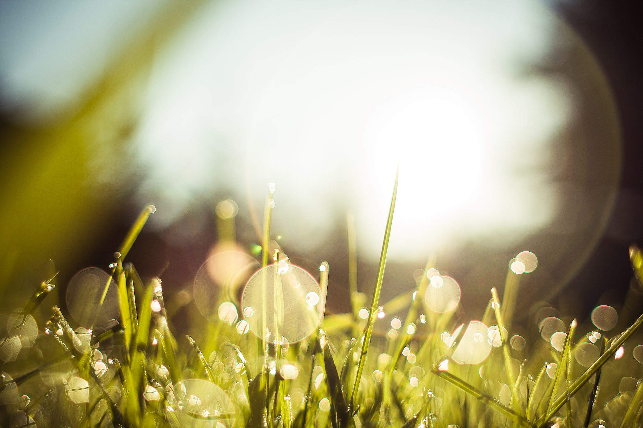 Morning Dew Grass Free Stock Photo