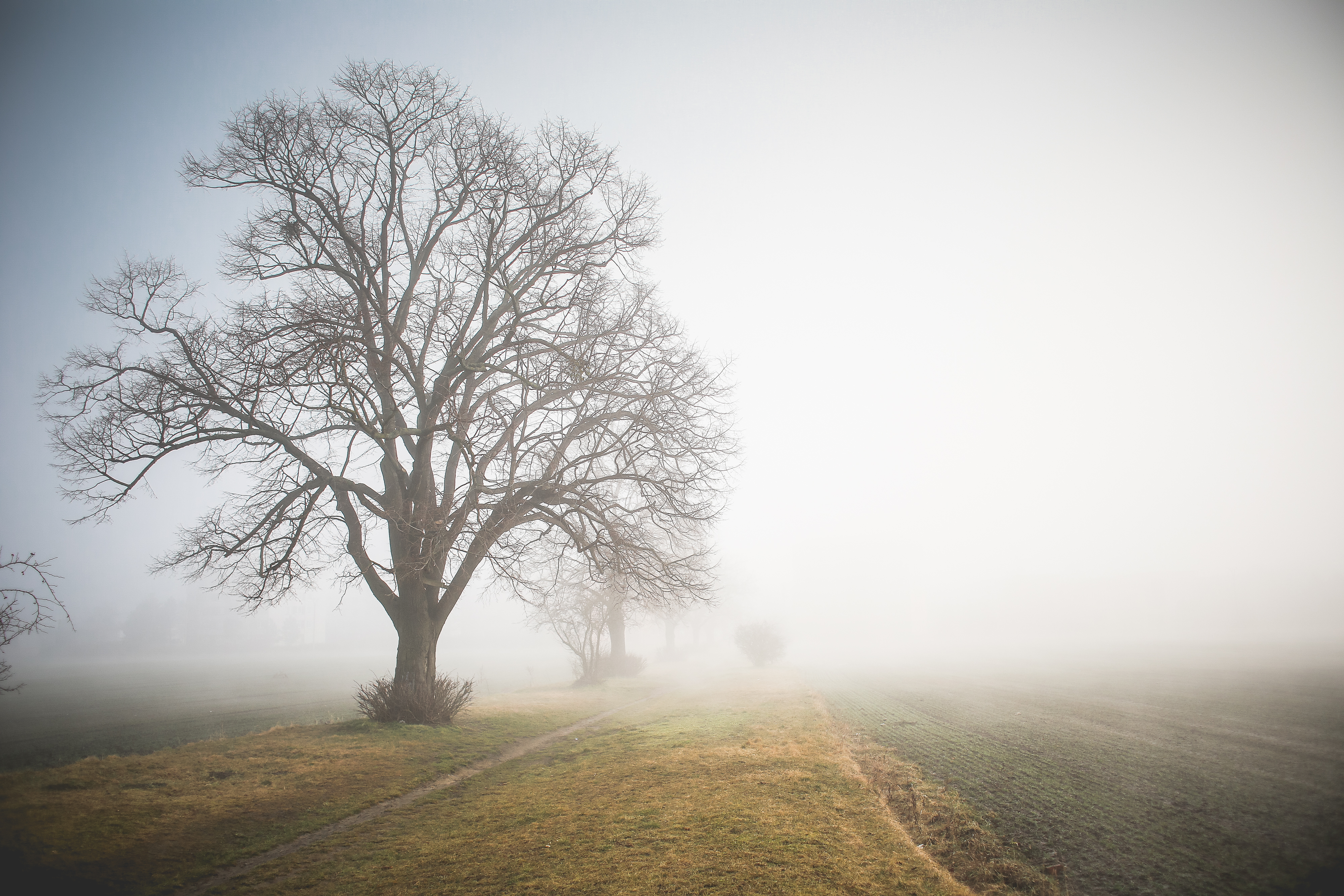 Morning Foggy Path Free Stock Photo