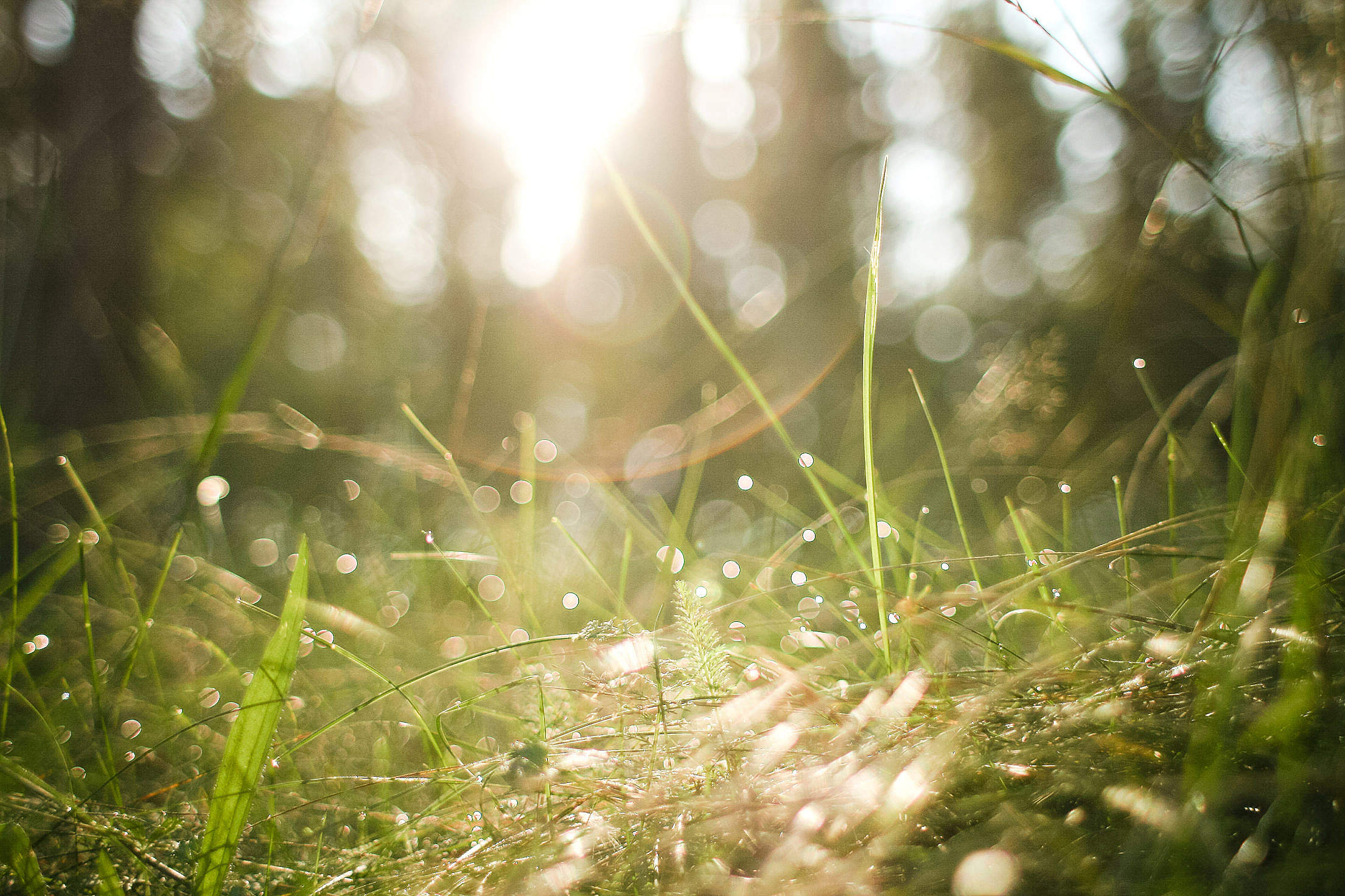 Morning Forest Grass Free Stock Photo