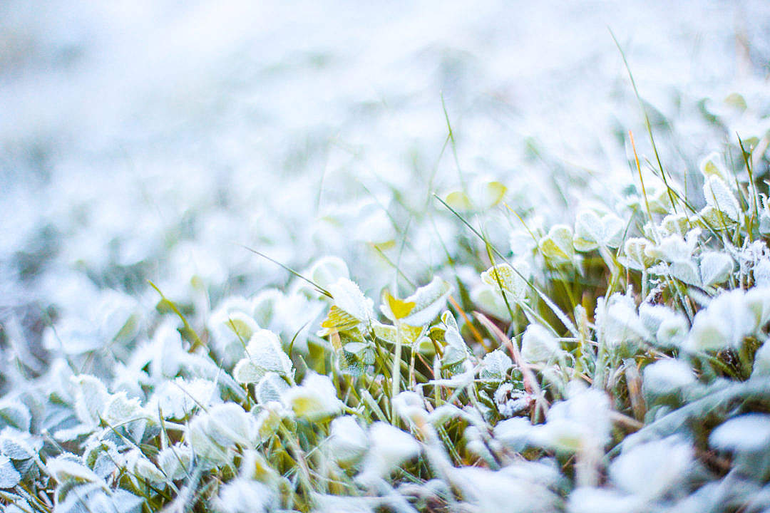 Download Morning Frozen Grass with Hoarfrost FREE Stock Photo