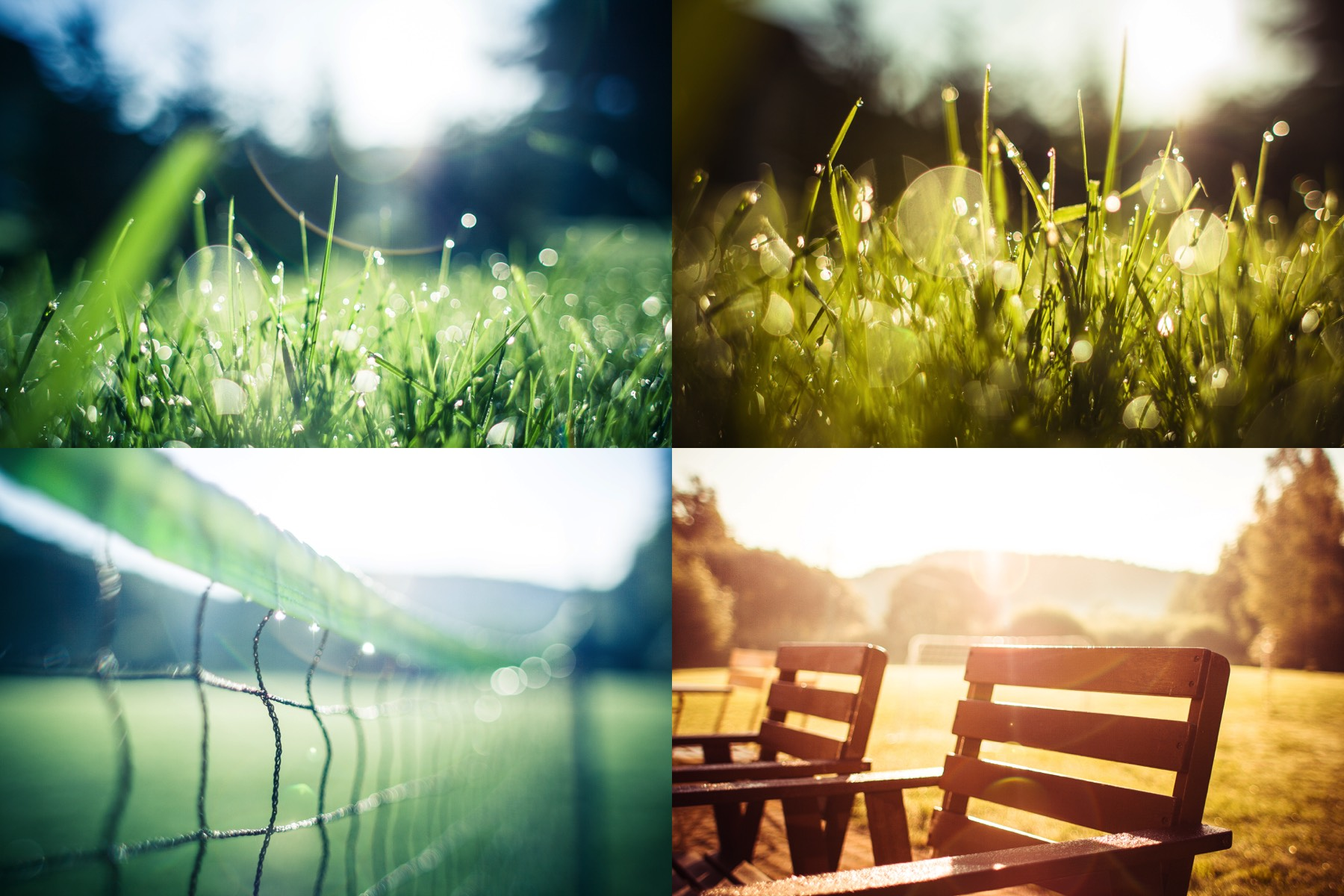 morning grass and garden collection preview