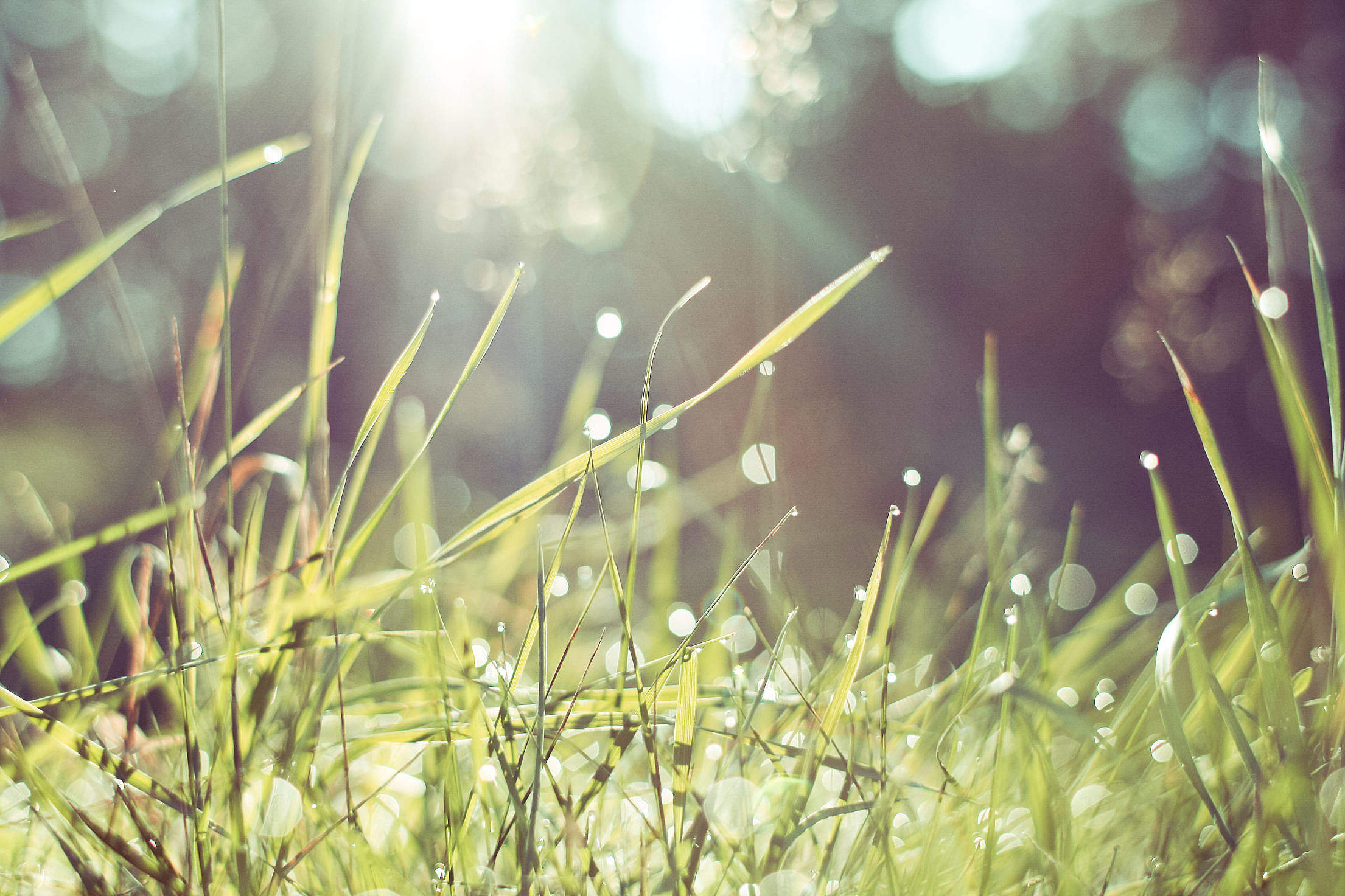 Morning Grass in Forest Free Stock Photo