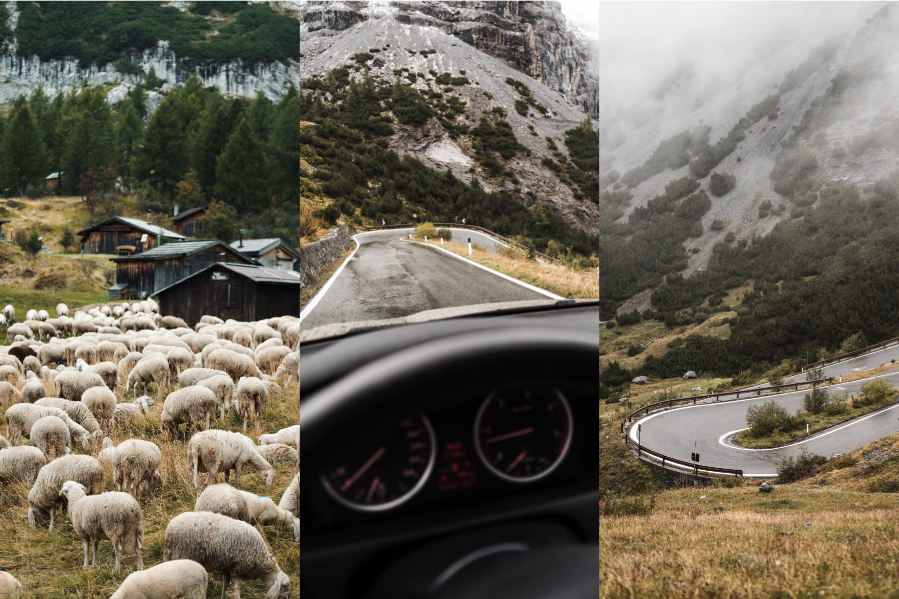 mountain sheeps stock photos stelvio road driving collection preview