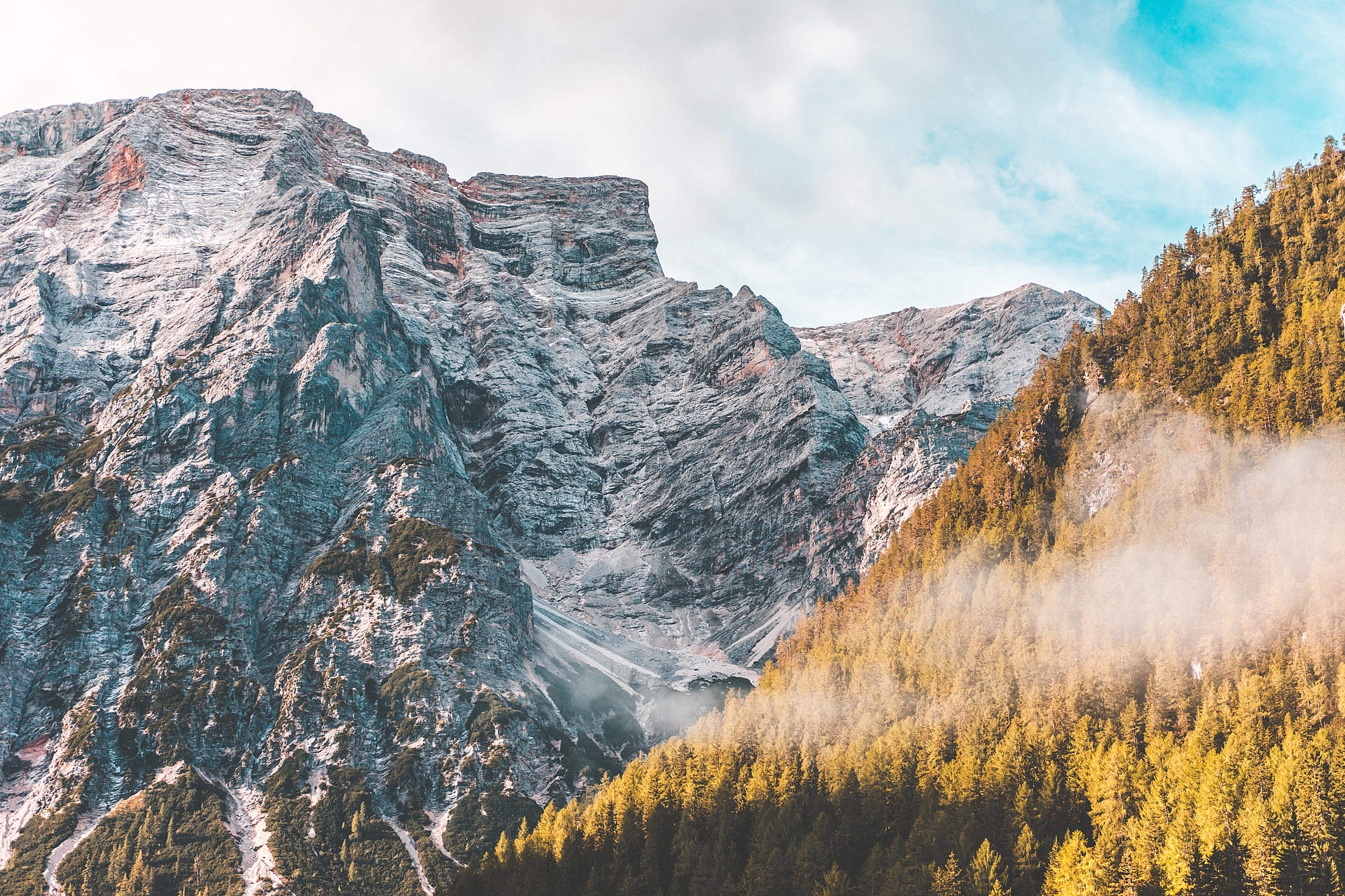 Mountains and Forest Free Stock Photo
