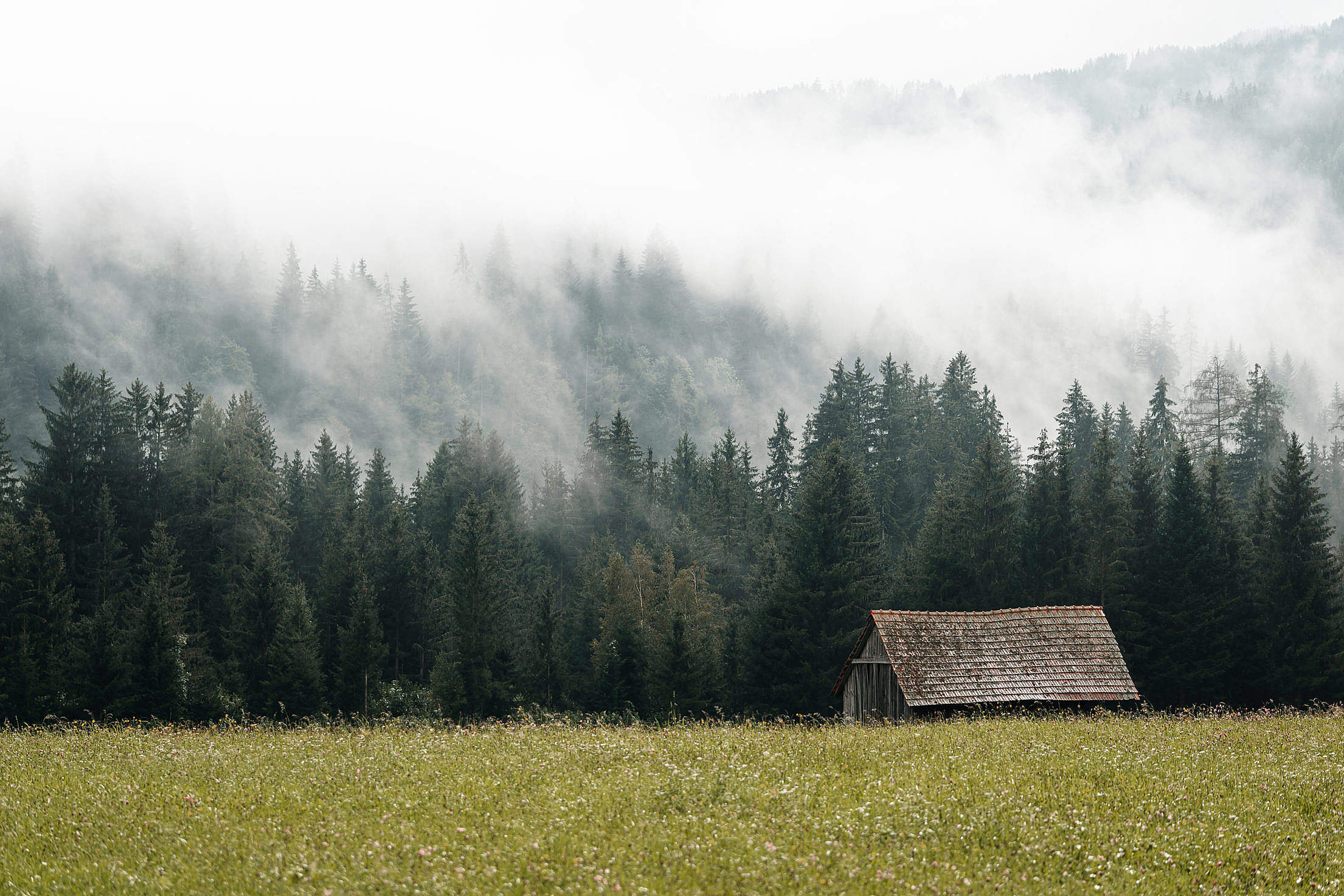 Old Barn Near The Forest Hidden in The Fog Free Stock Photo