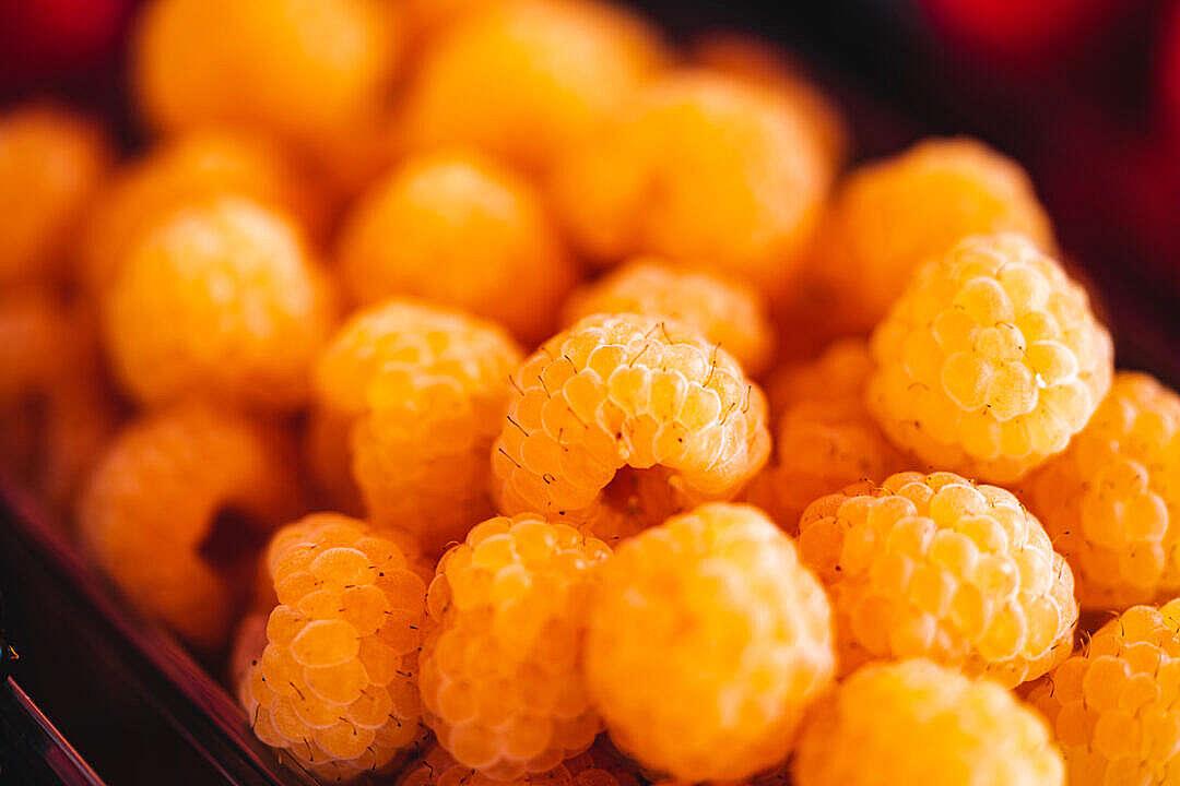 Download Organic Yellow Raspberries FREE Stock Photo