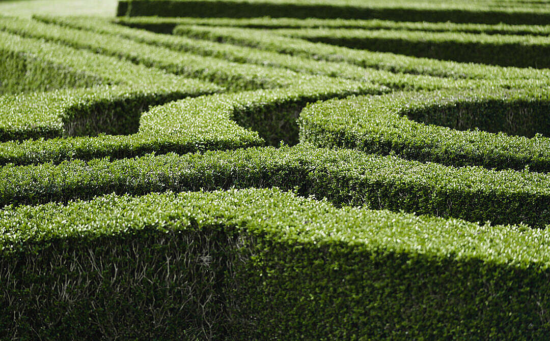 Download Ornamental Garden with Hedges of Buxus FREE Stock Photo