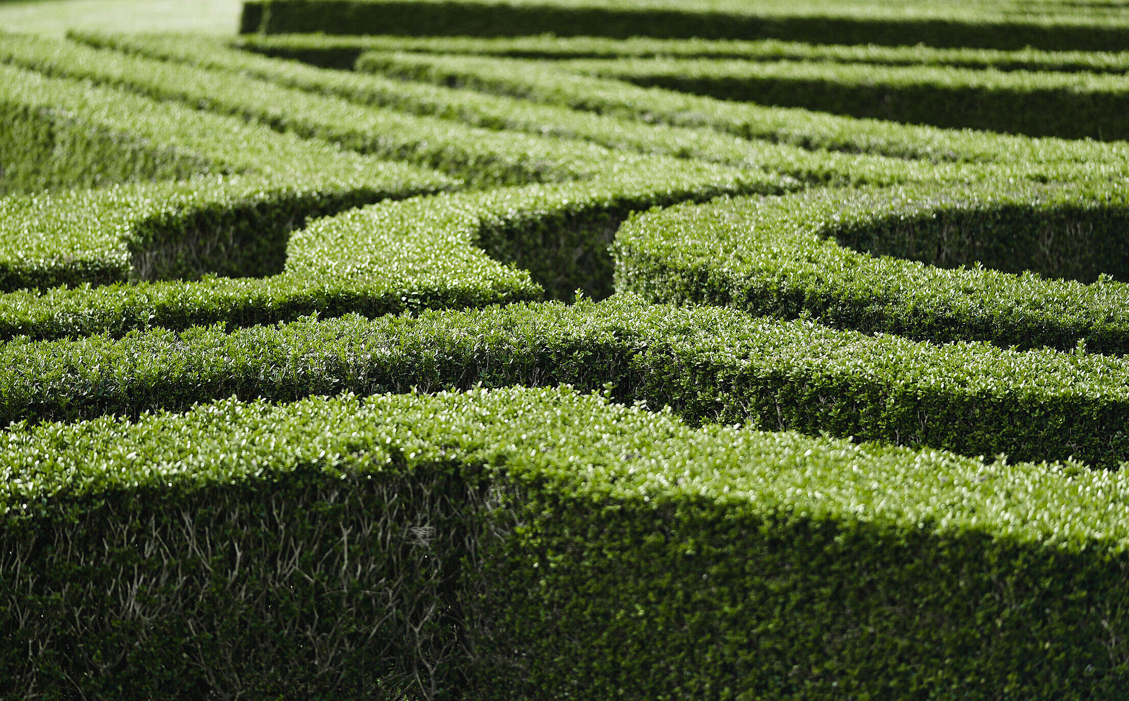 Ornamental Garden with Hedges of Buxus Free Stock Photo