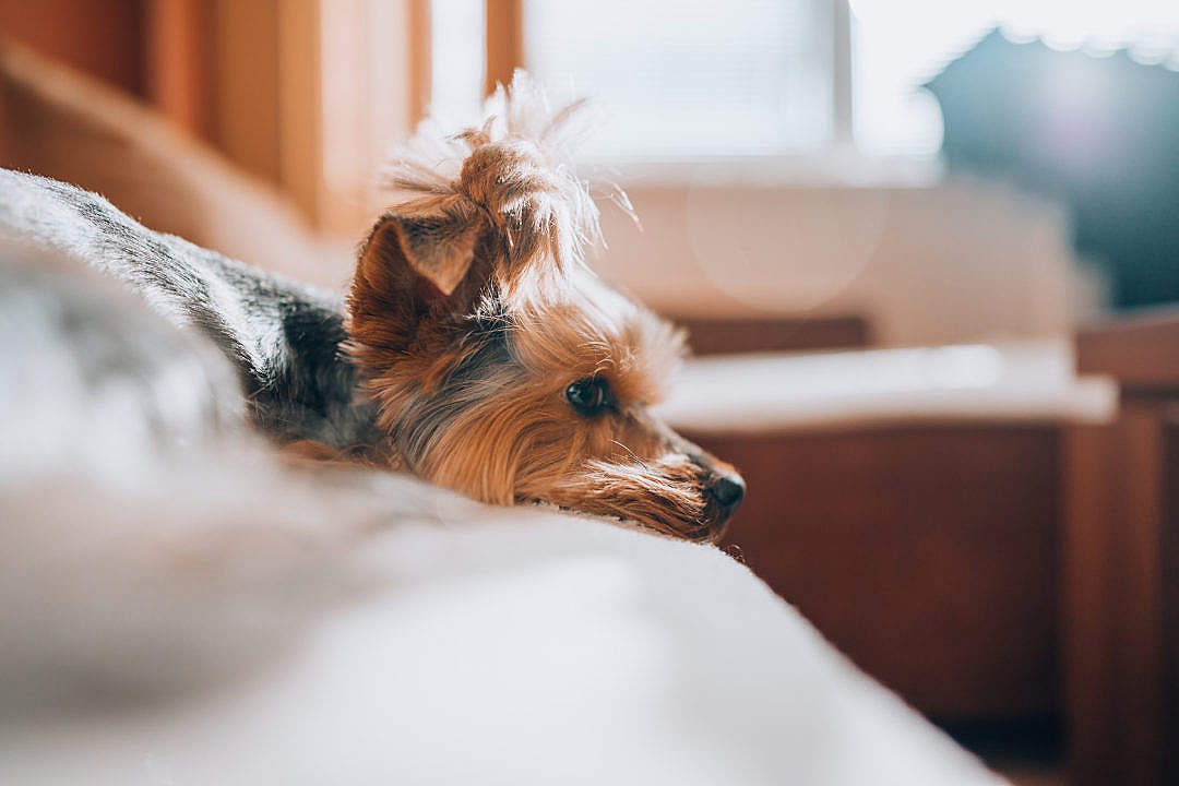 Download Our Dog Jessie Relaxing on a Sofa FREE Stock Photo