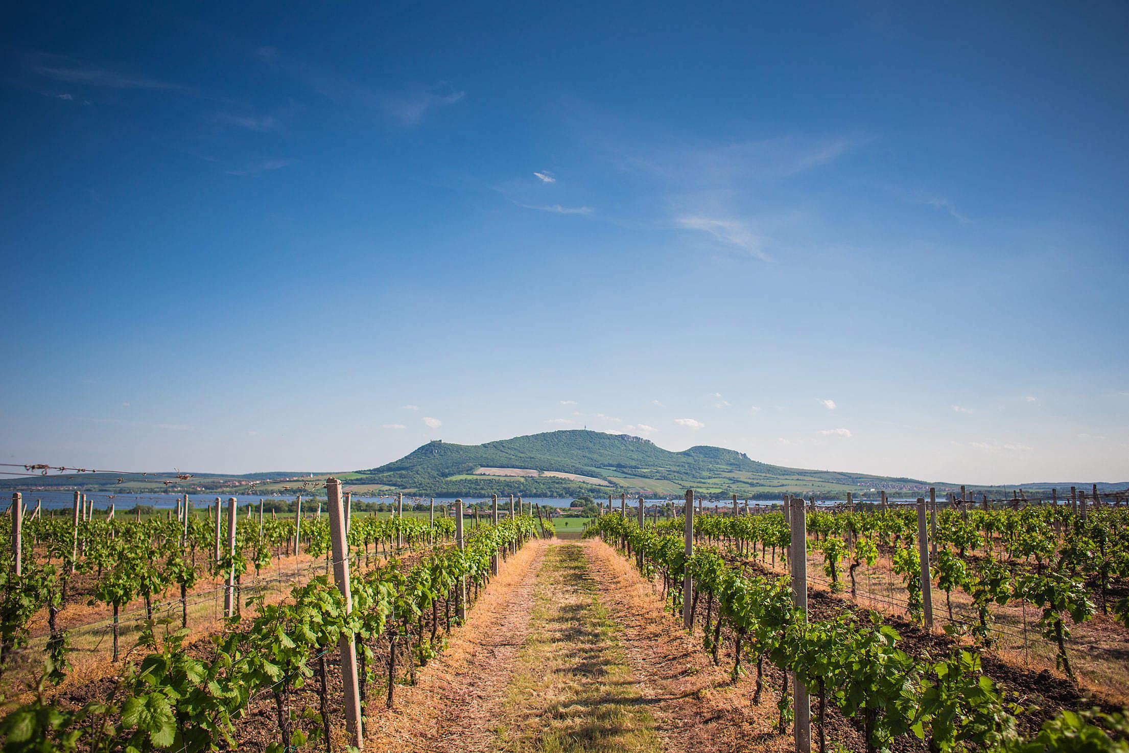 Pálava Hills Wine Scenery, Czech Republic Free Stock Photo