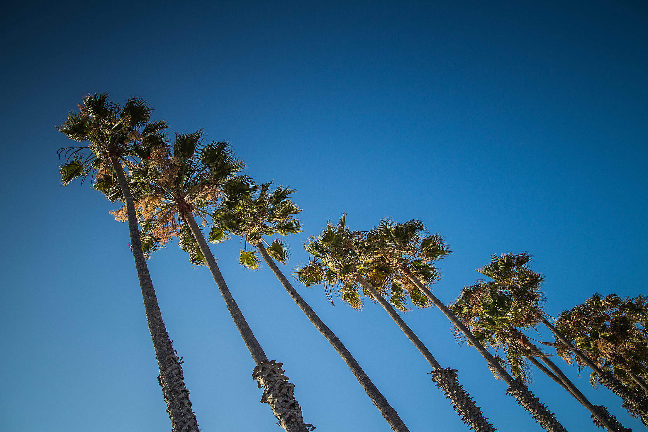 Palm Line In The Sky Free Stock Photo