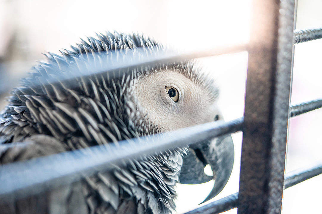 Download Parrot FREE Stock Photo