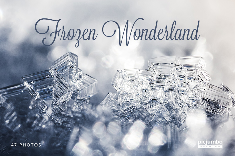 Frozen Wonderland — get it now in picjumbo PREMIUM!