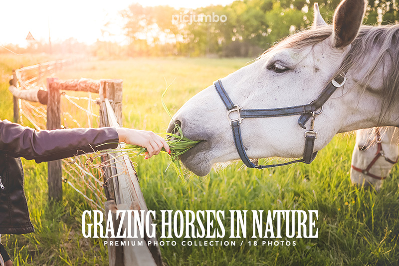 Grazing Horses in Nature