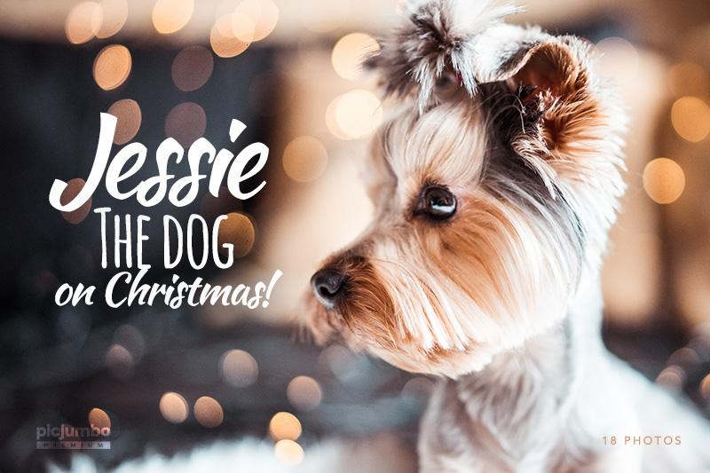 Jessie The Dog on Christmas — get it now in picjumbo PREMIUM!