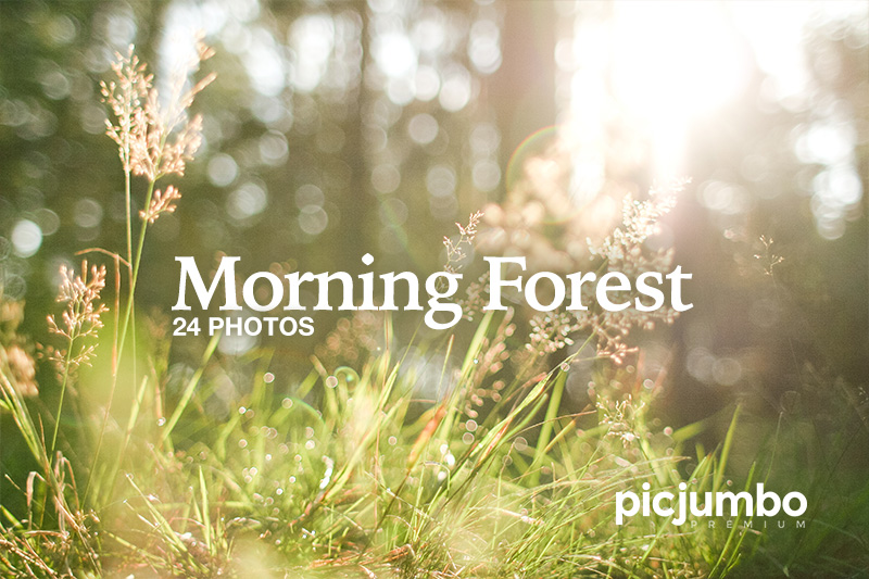 Get this collection now: Morning Forest
