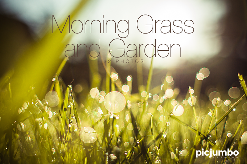 Morning Grass and Garden