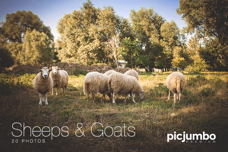 Get this collection now: Sheeps & Goats