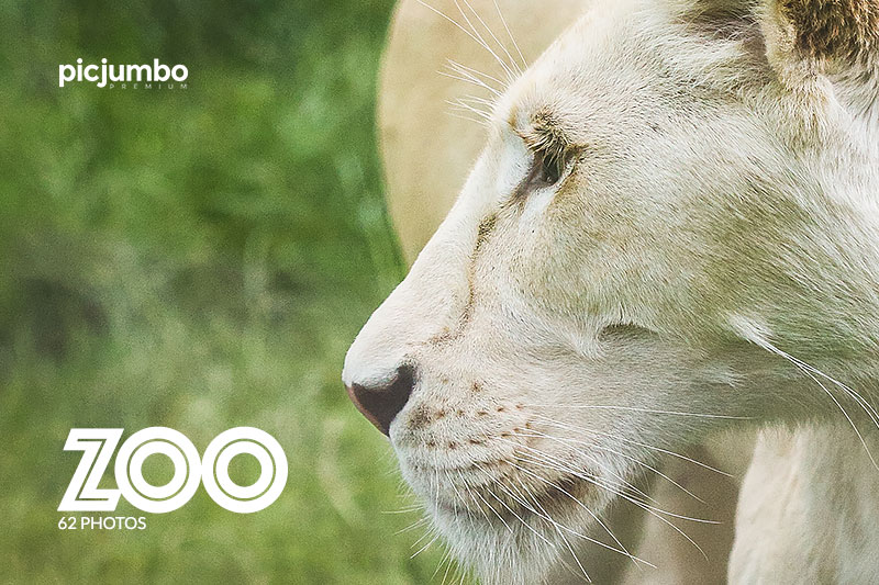ZOO — Join PREMIUM and get instant access to this collection!