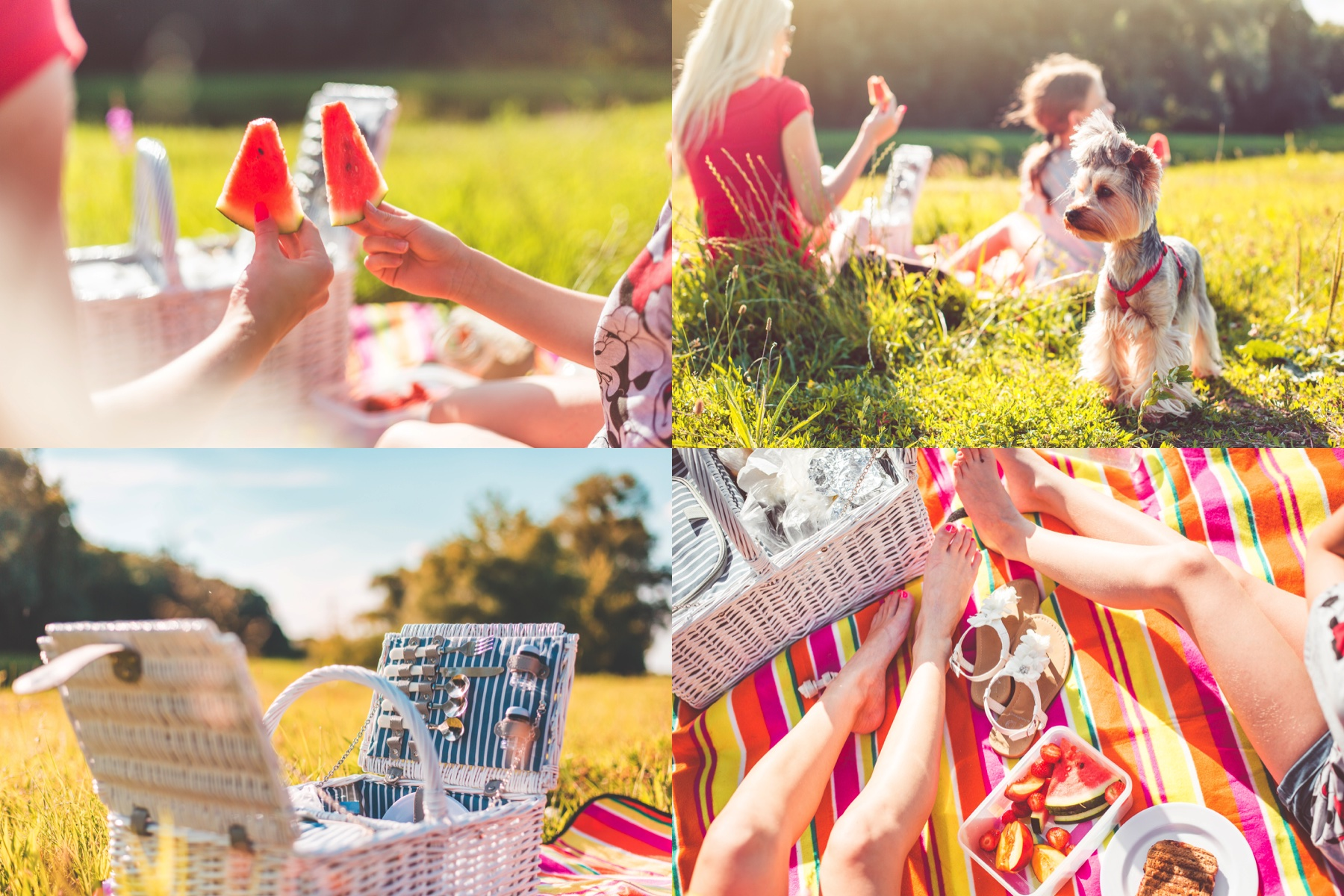 picnic-collection-collage-preview