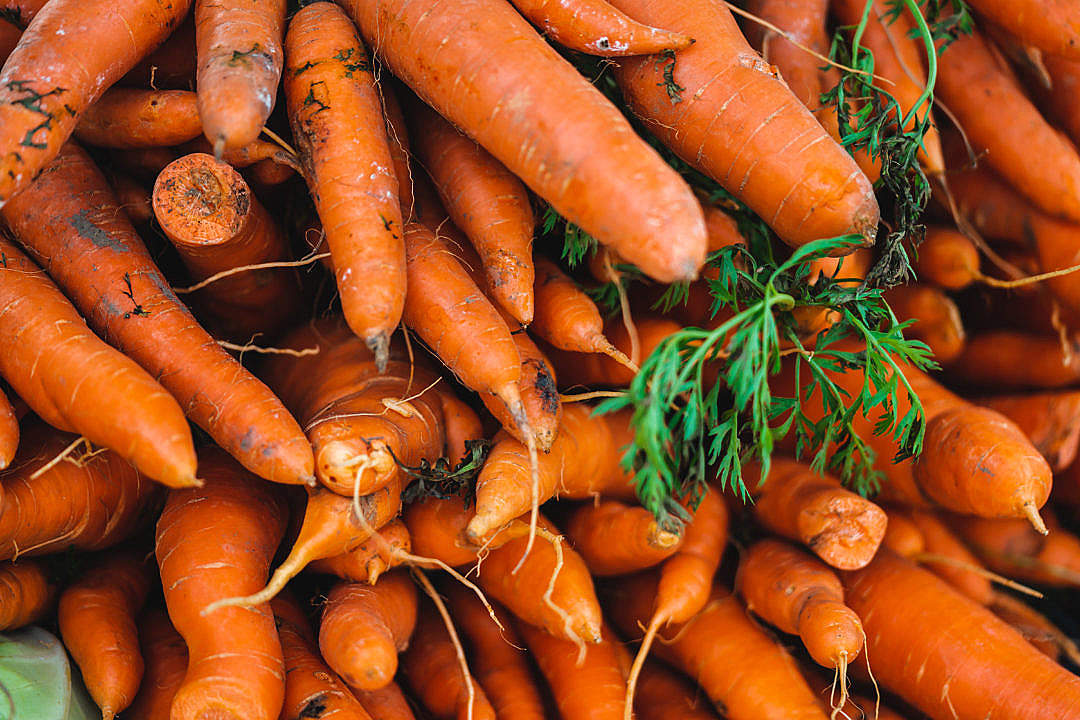 Download Pile of Carrots FREE Stock Photo