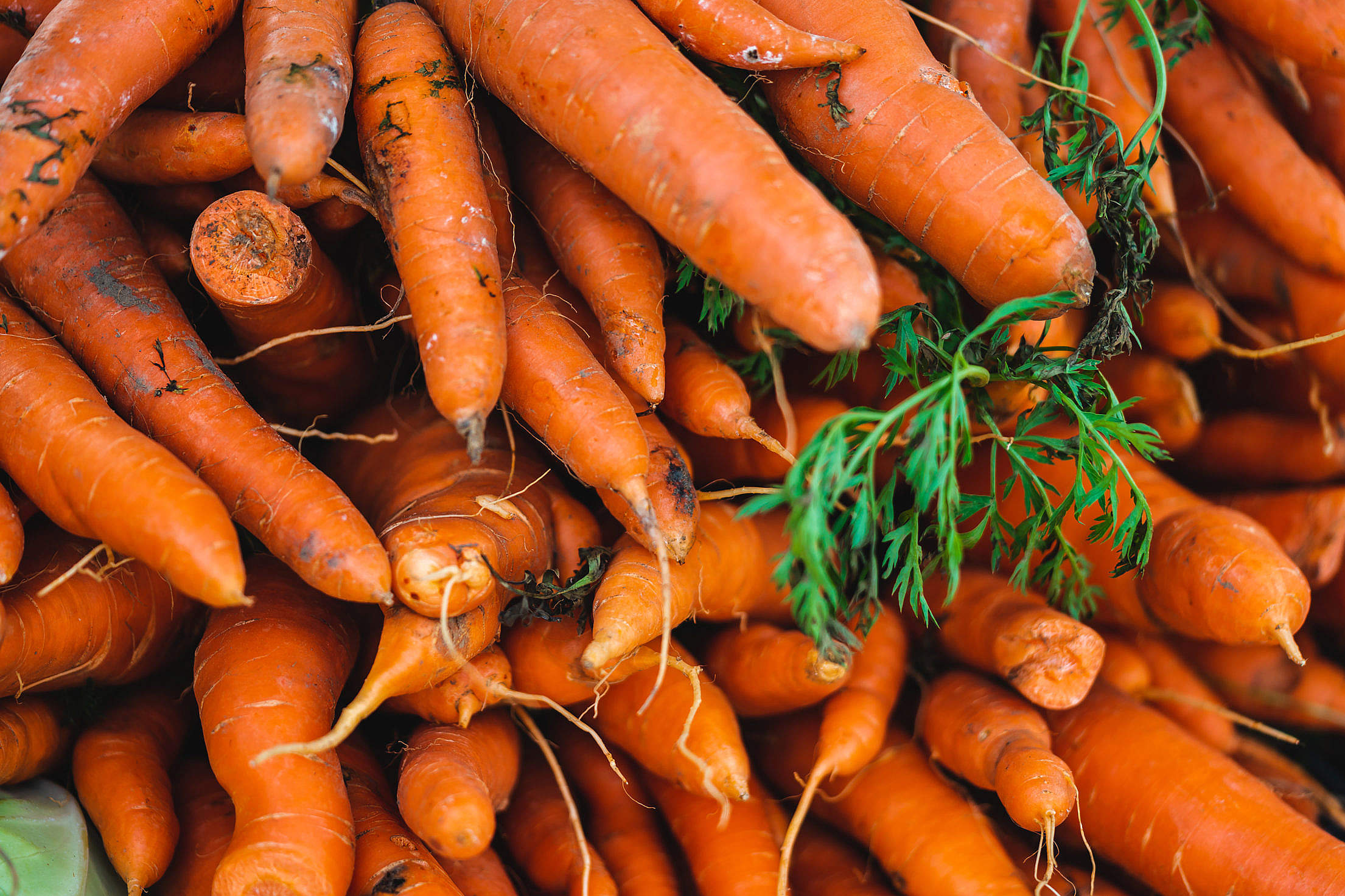 Pile of Carrots Free Stock Photo