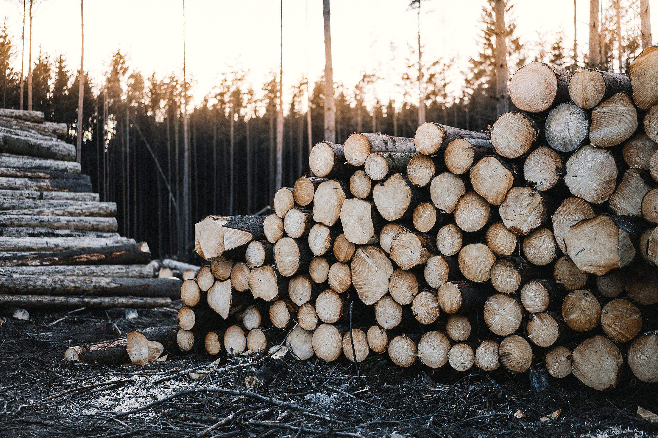 Download Pile of Felled Wood Logs Free Stock Photo