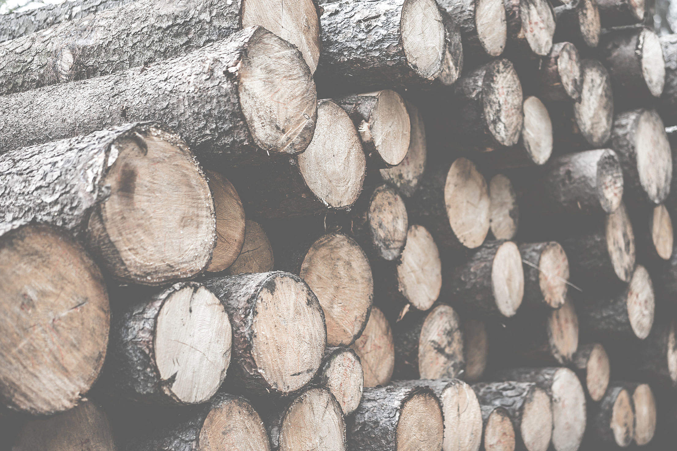 Pile of Felled Wood Logs Desaturated Free Stock Photo