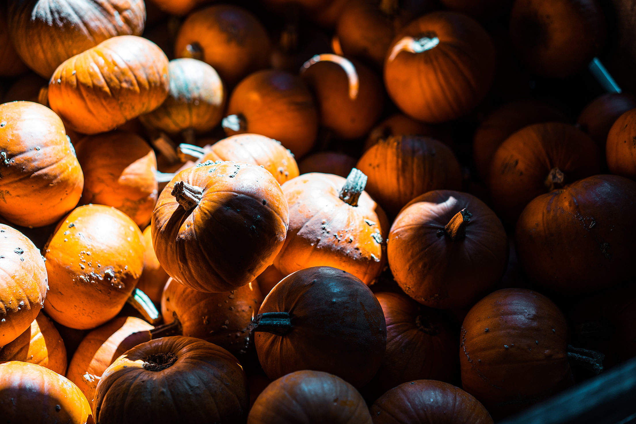 Pile of Pumpkins Free Stock Photo