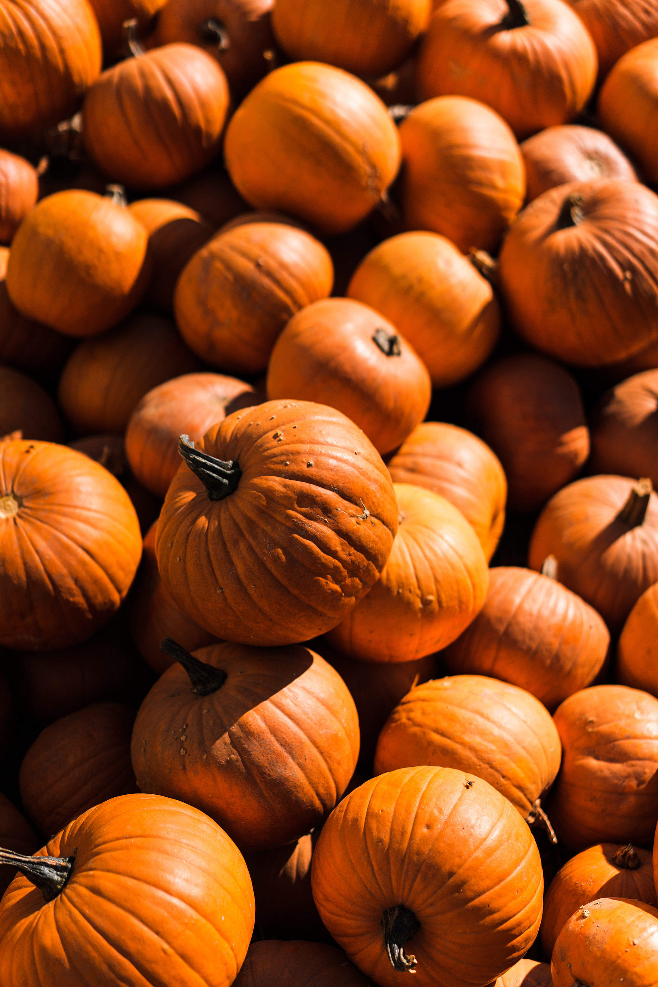 Pile of Pumpkins Vertical Free Stock Photo