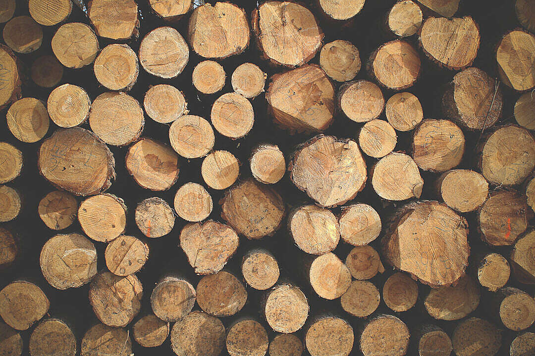 Download Pile of Wood FREE Stock Photo