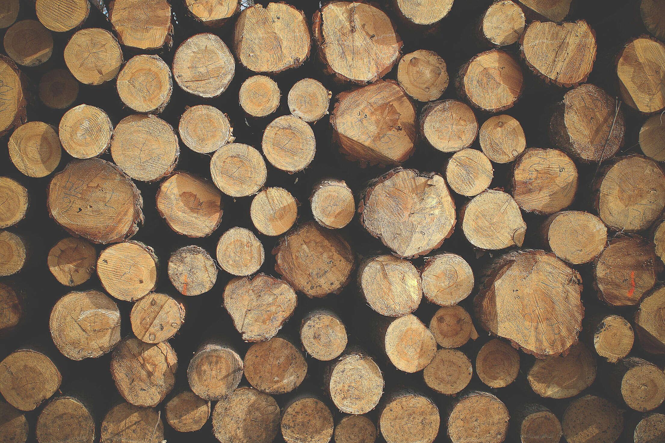 Pile of Wood Free Stock Photo