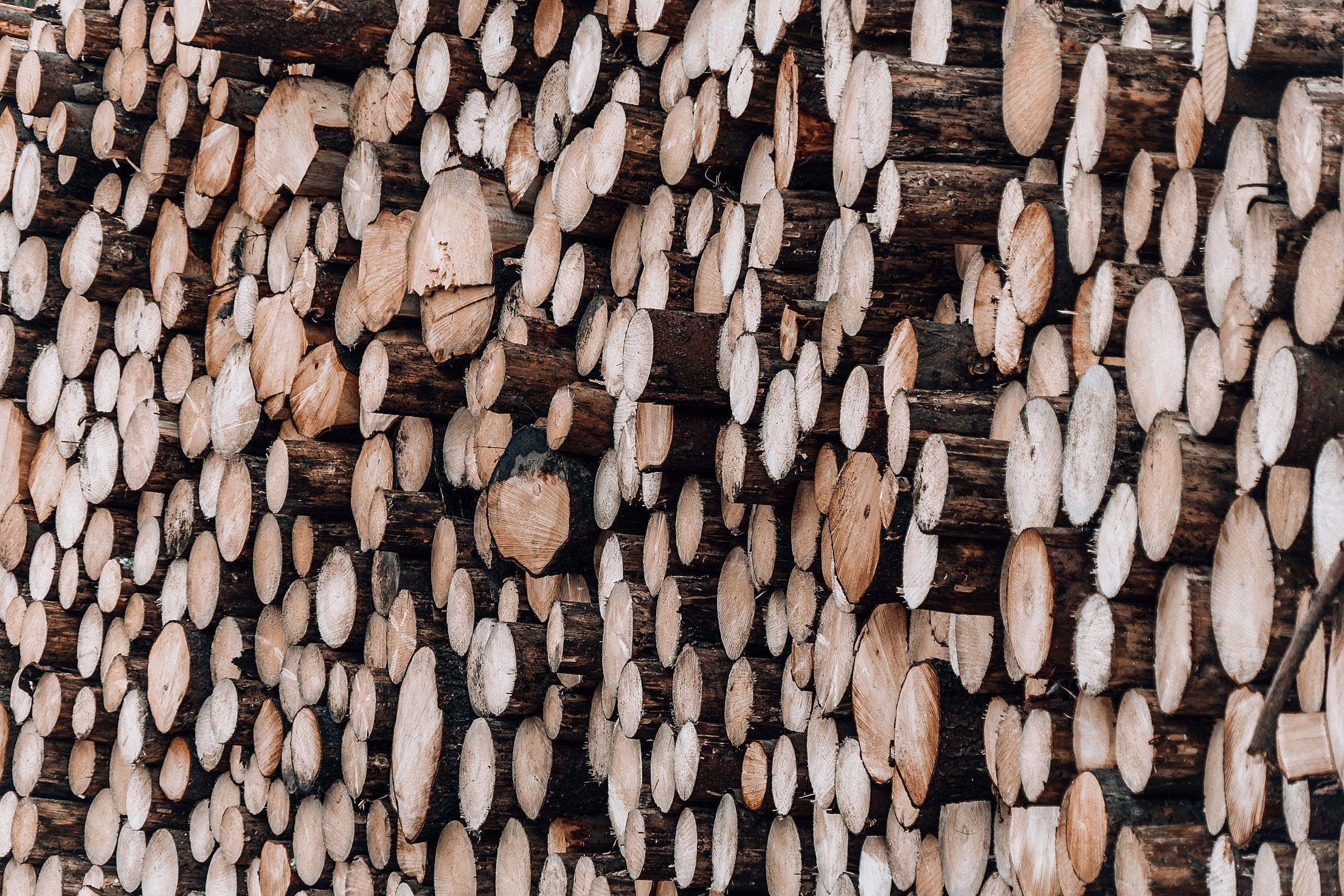 Download Pile of Wood Logs Free Stock Photo