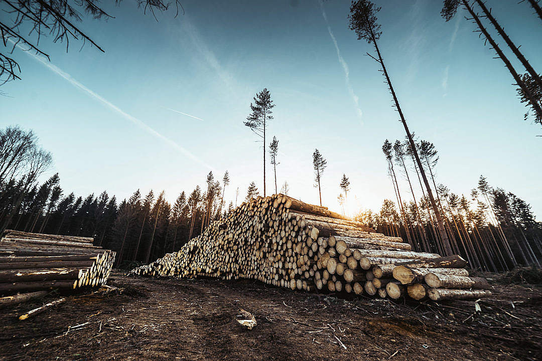 Download Pile of Wood Logs in Forest FREE Stock Photo