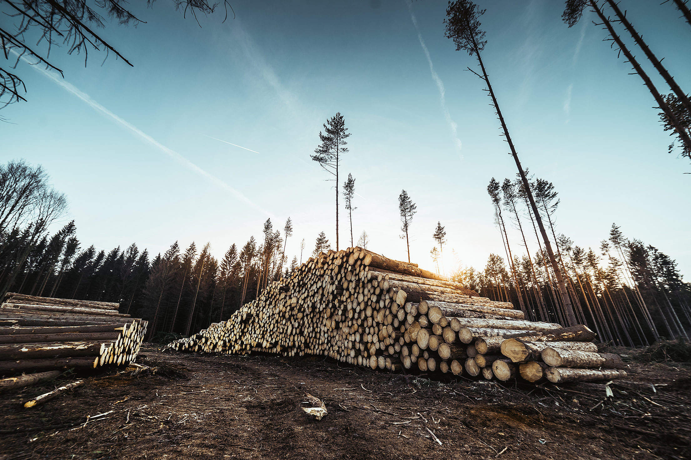 Pile of Wood Logs in Forest Free Stock Photo