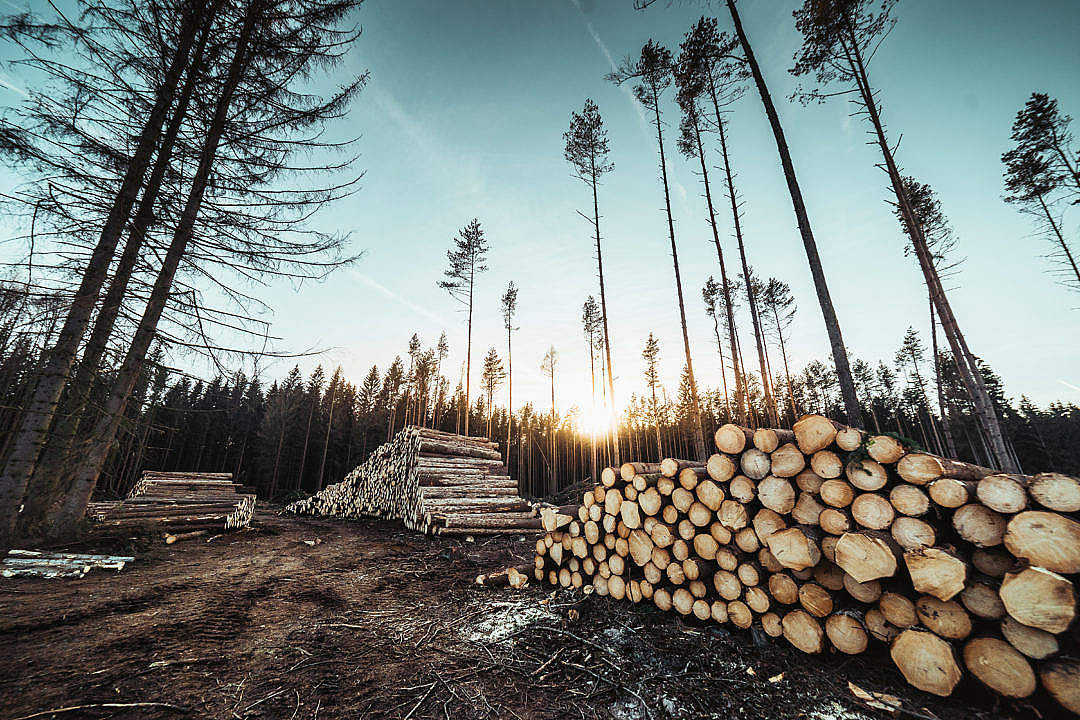 Download Piles of Wood Logs Forestry FREE Stock Photo