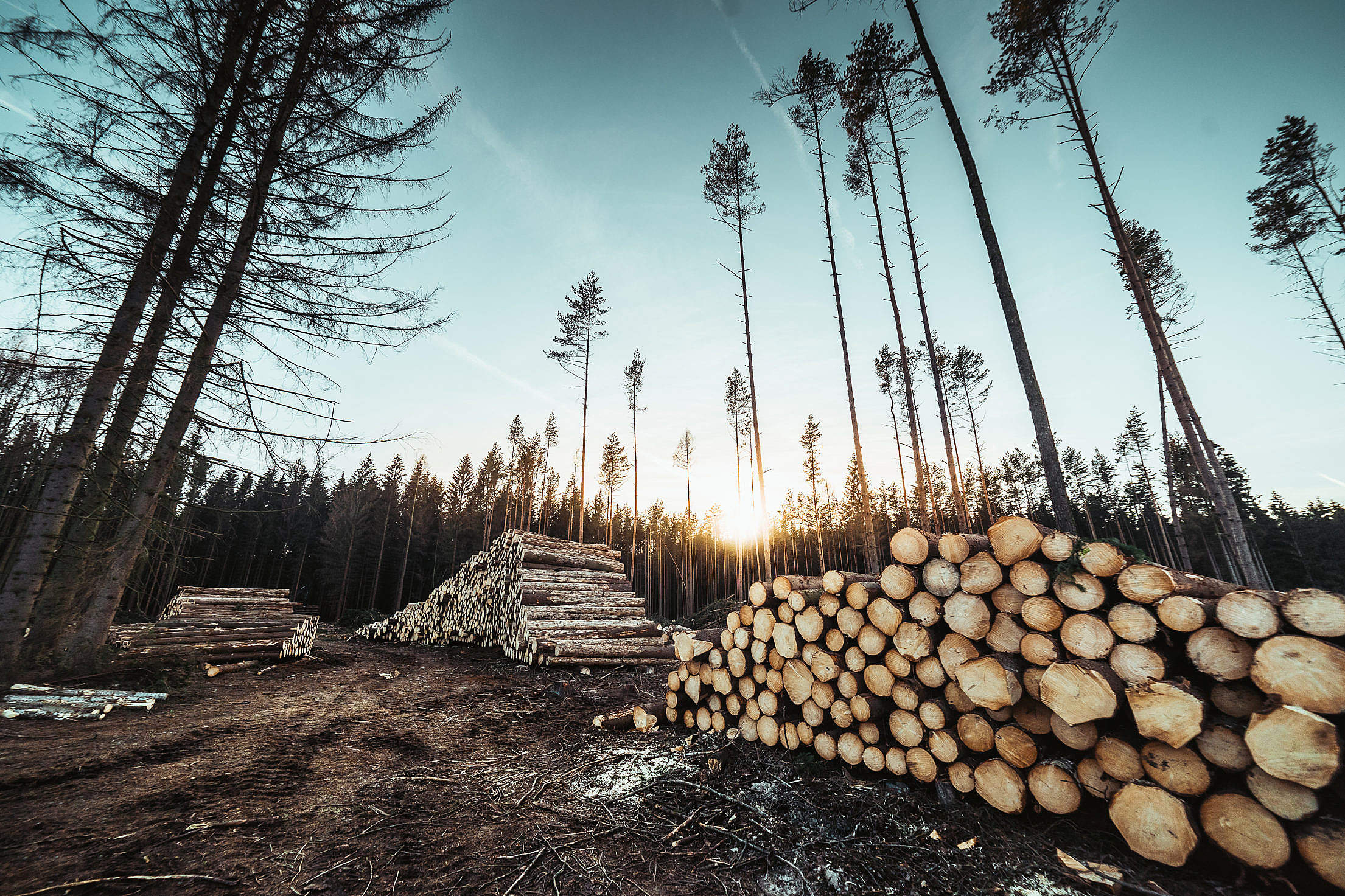 Piles of Wood Logs Forestry Free Stock Photo