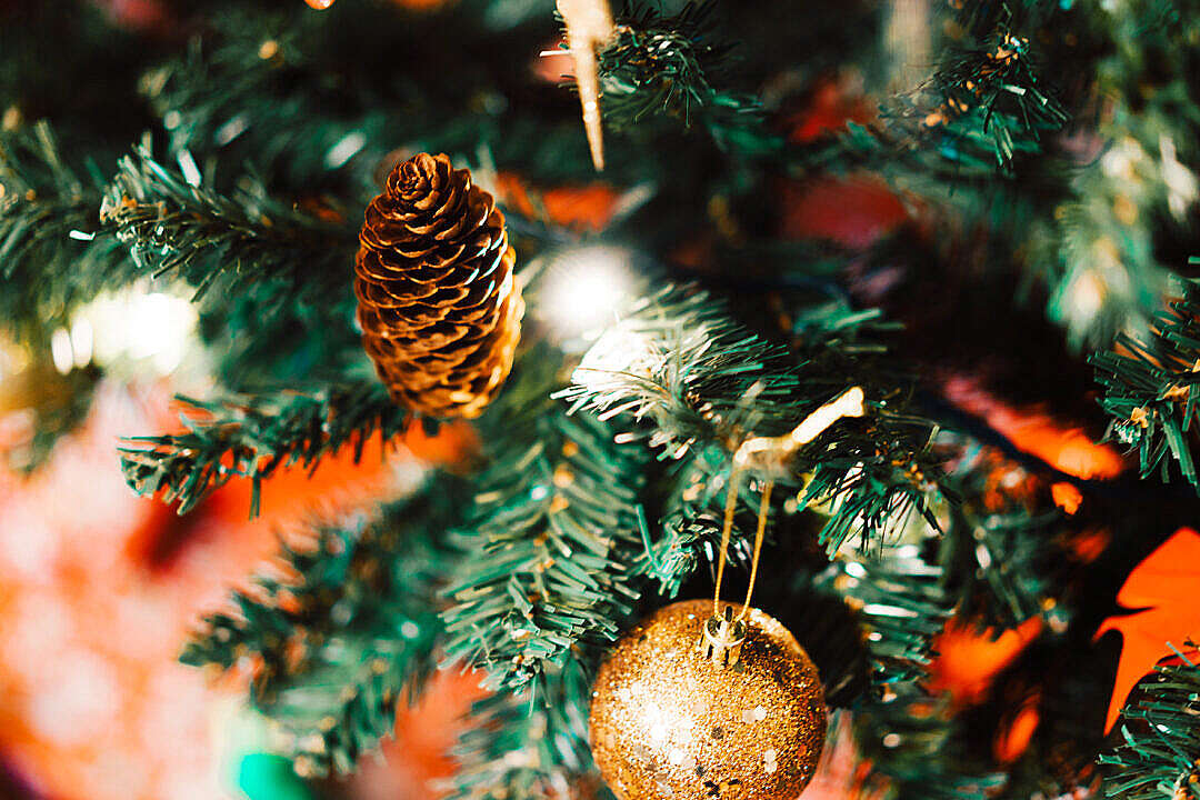 Download Pine Cone on Christmas Tree Close Up FREE Stock Photo