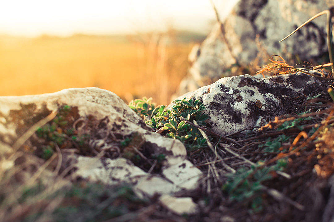 Download Plants and Rocks FREE Stock Photo