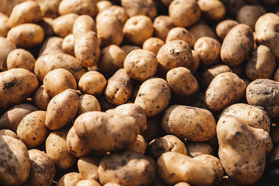 Download Potatoes FREE Stock Photo
