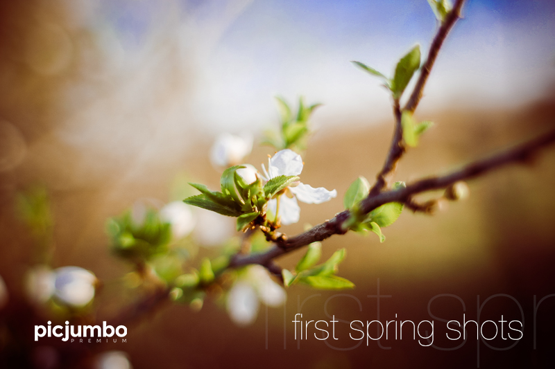 Get this collection now: First Spring Shots
