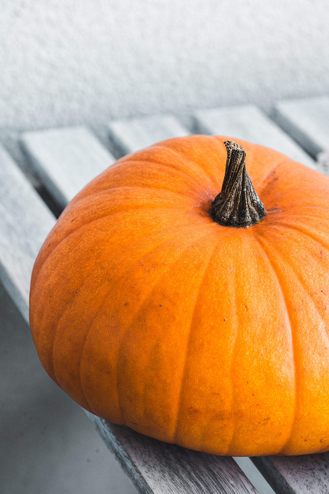 Download Pumpkin FREE Stock Photo
