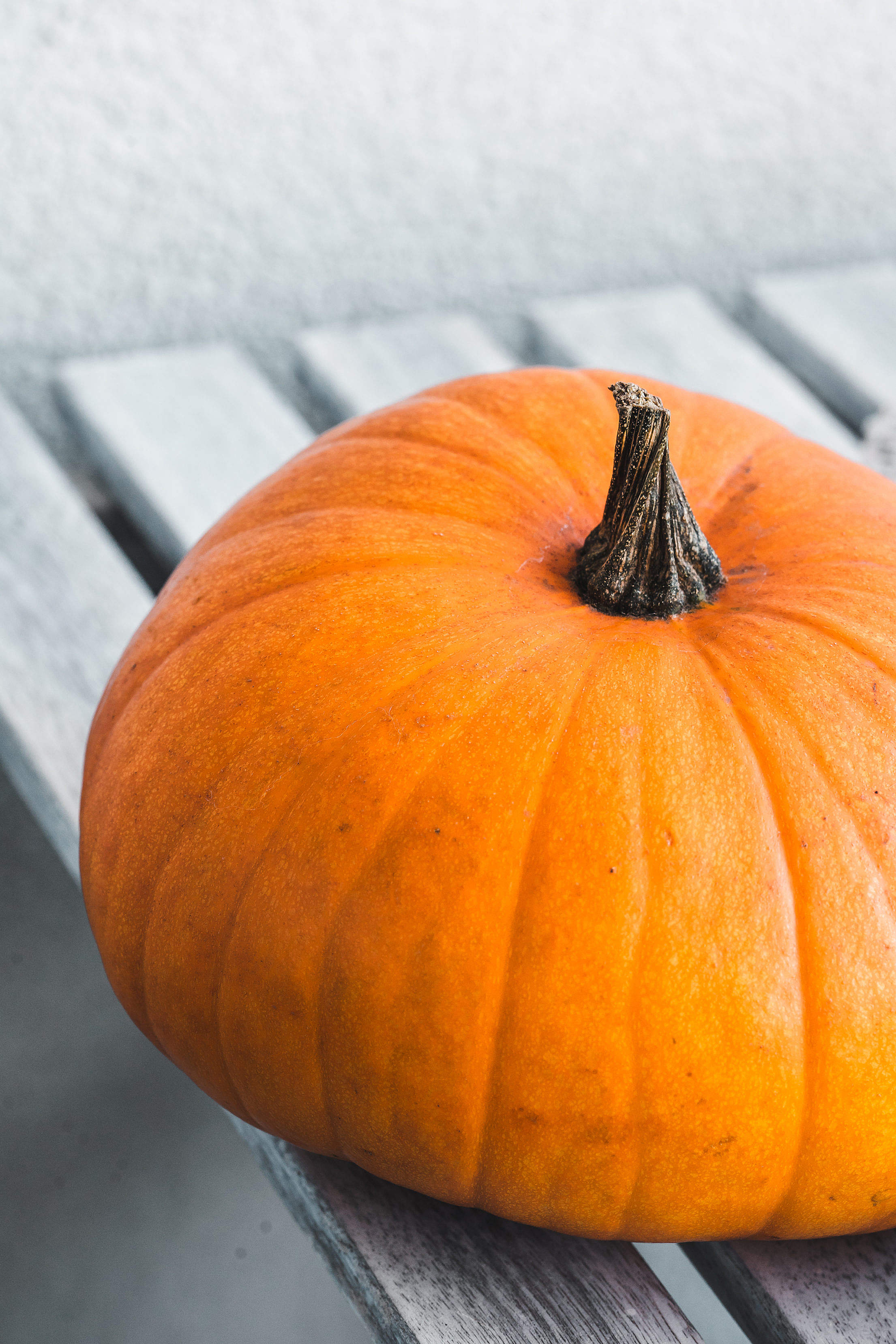 Pumpkin Free Stock Photo