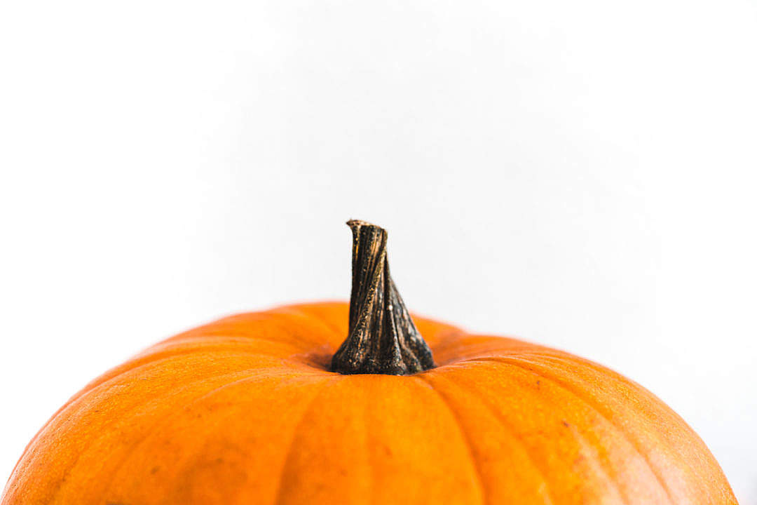 Download Pumpkin on a White Background FREE Stock Photo